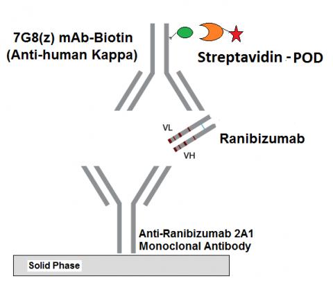 IG-AB110 Ranibizumab